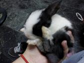 寵物-兔子:兔子-154.JPG