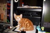 寵物-貓:波妞-09.jpg