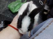 寵物-兔子:兔子-155.JPG