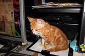 寵物-貓:波妞-10.jpg