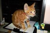 寵物-貓:波妞-12.jpg