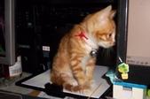 寵物-貓:波妞-15.jpg