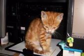 寵物-貓:波妞-16.jpg