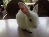 寵物-兔子:兔子-001.JPG