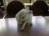 寵物-兔子:兔子-002.JPG
