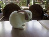 寵物-兔子:兔子-003.JPG