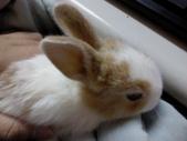 寵物-兔子:兔子-005-Q.JPG