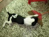 寵物-貓: