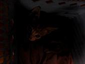 寵物-貓:波妞-01.JPG