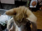 寵物-貓:波妞-03.JPG