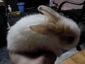 寵物-兔子:兔子-144.JPG