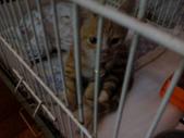 寵物-貓:波妞-05.JPG
