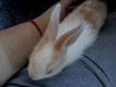 寵物-兔子:兔子-149.JPG