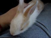 寵物-兔子:兔子-150.JPG