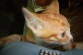 寵物-貓:波妞-08.jpg