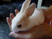 寵物-兔子:兔子-152.JPG