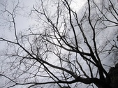2010 Japan    Kyoto 京都:1040079117.jpg