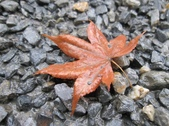 2010 Japan    Kyoto 京都:1040079124.jpg