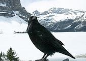 加拿大:CRW_9118