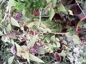 14楓之琳園藝小苗種子圖檔很多稀有植物:IMG_20130728_162446.jpg