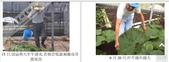 6楓之琳園藝小苗種子圖檔很多稀有植物:T2N5iIXctcXXXXXXXX_!!737209148.jpg