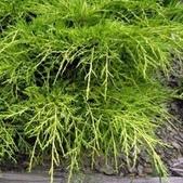 12楓之琳園藝小苗種子圖檔很多稀有植物:4430_P_1367044282930.jpg