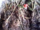 8楓之琳園藝小苗種子圖檔很多稀有植物:IMG_20130728_123231