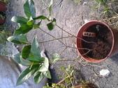 14楓之琳園藝小苗種子圖檔很多稀有植物:20130527_161643