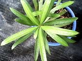 6楓之琳園藝小苗種子圖檔很多稀有植物:IMG_20131004_113537.jpg