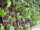 6楓之琳園藝小苗種子圖檔很多稀有植物:T2OcNtXvdaXXXXXXXX_!!246482583.jpg