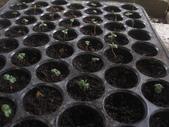 13楓之琳園藝小苗種子圖檔很多稀有植物:IMG_5382.jpg