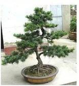 14楓之琳園藝小苗種子圖檔很多稀有植物:T21MH1XclXXXXXXXXX_!!152425380.jpg_310x310.jpg