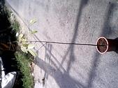 6楓之琳園藝小苗種子圖檔很多稀有植物:IMG_20131004_112308.jpg