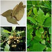 5楓之琳園藝小苗種子圖檔很多稀有植物:_RDO4Lt8BTbaSoVsm4QIqg.jpg