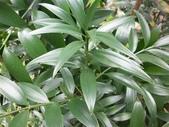 4楓之琳園藝小苗種子圖檔很多稀有植物:bsy7J2sQqp1mjt6e7PlMZA.jpg