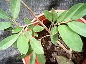 6楓之琳園藝小苗種子圖檔很多稀有植物:IMG_20131004_113450.jpg
