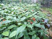 5楓之琳園藝小苗種子圖檔很多稀有植物:xwKmNEOgH9l2FS8G5496lQ.jpg
