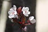 5楓之琳園藝小苗種子圖檔很多稀有植物:E6lX1WoJtXwaLZjos_5w_Q.jpg