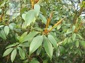 6楓之琳園藝小苗種子圖檔很多稀有植物:images.jpg