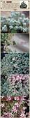 6楓之琳園藝小苗種子圖檔很多稀有植物:T2CLfNXXFaXXXXXXXX_!!766334988.jpg