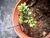 6楓之琳園藝小苗種子圖檔很多稀有植物:IMG_20131004_113503.jpg