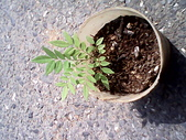6楓之琳園藝小苗種子圖檔很多稀有植物:IMG_20131004_112614.jpg