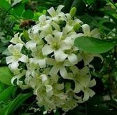 4楓之琳園藝小苗種子圖檔很多稀有植物:_GnBECgT1wjdqiYENS0sjA.jpg