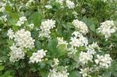 4楓之琳園藝小苗種子圖檔很多稀有植物:F5_e3nO3P5FCjfXU4fXywg.jpg