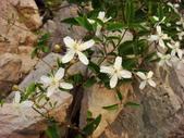 14楓之琳園藝小苗種子圖檔很多稀有植物:1709116058587820411.jpg