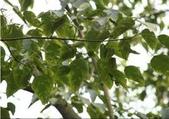 6楓之琳園藝小苗種子圖檔很多稀有植物:下載 (2).jpg
