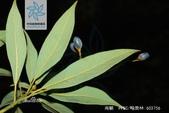 6楓之琳園藝小苗種子圖檔很多稀有植物:9d82d158ccbf6c81ebea20dfbd3eb13532fa828ba61e681b.jpg