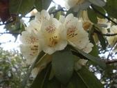 2楓之琳園藝小苗種子圖檔很多稀有植物:DyhbPS5f1bTiaPNz_C__Wg.jpg