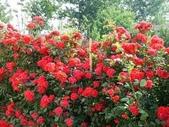 4楓之琳園藝小苗種子圖檔很多稀有植物:nJ30q2MdZiRPXCI_Q5tjvw.jpg