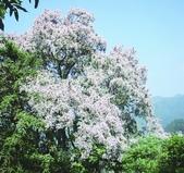 10楓之琳園藝小苗種子圖檔很多稀有植物:291_201105301248281ZDHA.jpg